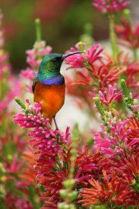 Pourquoi un colibri ?
